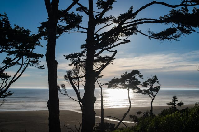 Stuart May Photography photo of Washington Coast's North Beach with view through Sitka Spruce Trees to Pacific Ocean